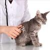 Ветеринарные клиники в Вавоже